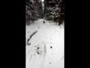собачья радость поносится в лесу