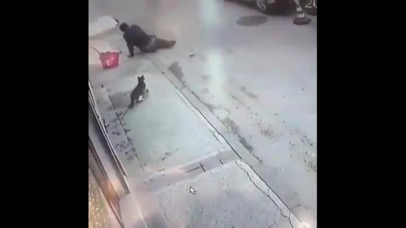 A VIOLÊNCIA TÁ DEMAIS SÓ TEM GATUNO mp4