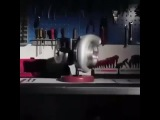 hamster turbine car