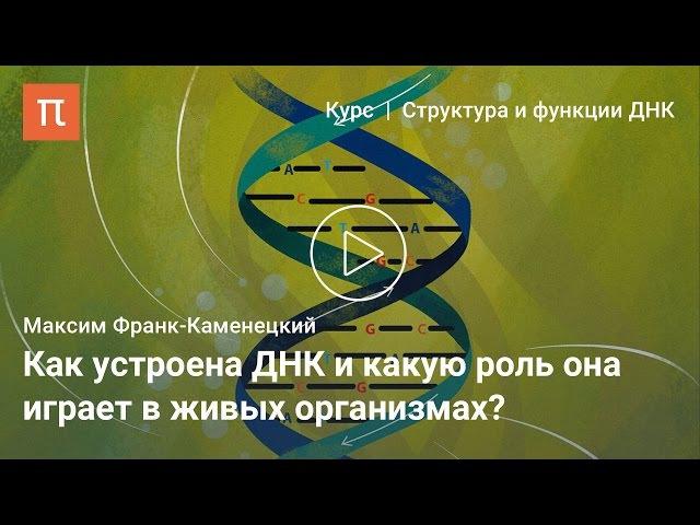 Каноническая структура ДНК — Максим Франк-Каменецкий