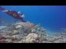 Дайвинг. Подводный мир красного моря. The underwater world of the Red Sea. Jordan.