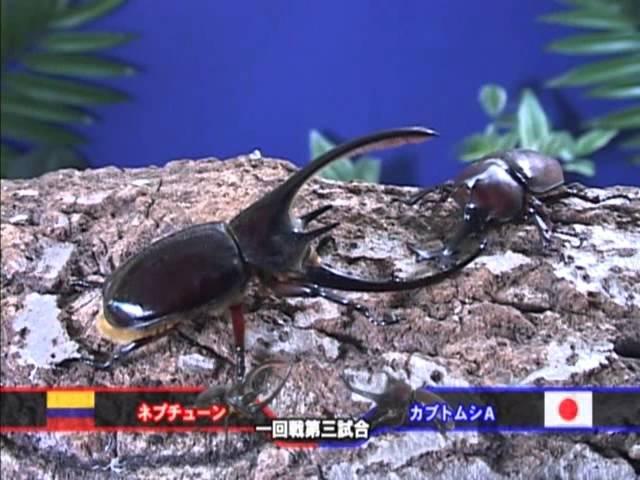 5.カブト★クワガタ世界最強タッグトーナメント 【Beetles★Stag Beetles World Strongest Tag Tournament】