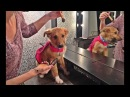 Puppy Gets On TV Finds His Happy Ever After!