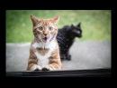 Улетные приколы, смешные приколы с котами и животными