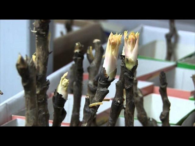 Агрофирма Поиск семена саженцы луковичные лук севок и многое другое