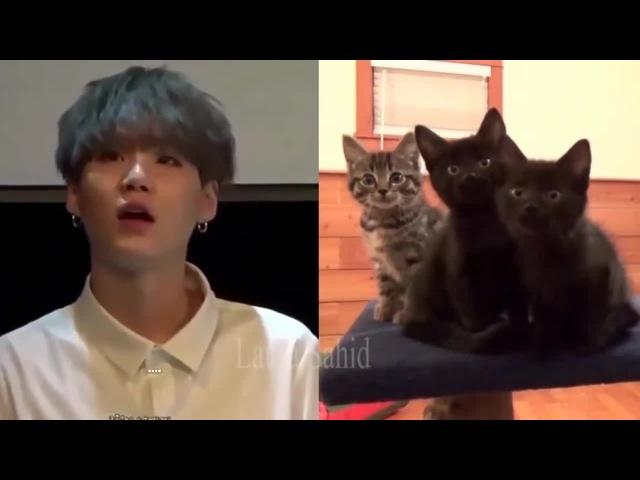 BTS Suga = Cute Kitten