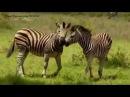 Док фильм BBC о дикой природе Африки очень крутой и познавательный фильм