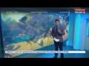 Ельцин центр атакуют вороны