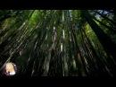 Ben Gold feat. Senadee - Today (Ferry Tayle Neverending Story Remix) Music Video