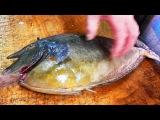 Japanese Street Food - UNICORN FISH Sashimi Seafood Okinawa Japan