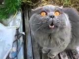 кот говорит открой глаза))) (online-video-cutter.com)