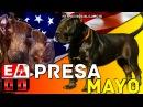 MOLOSO PRESA MAYO || Toda La Verdad Acerca De Esta Nueva Raza de Perros