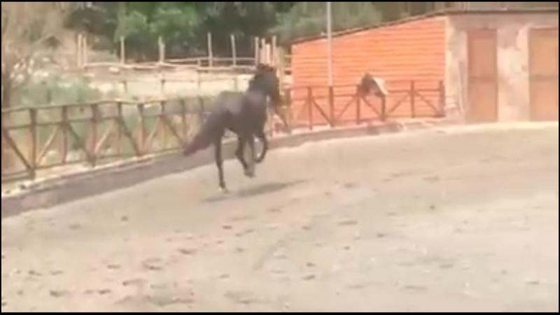 Miraje Horse Riding Center