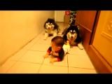 Собаки следуют за малышом )  #новые лучшие прикол самые смешное видео Фейлы fail коты девушки путин ржач новинки new 100500