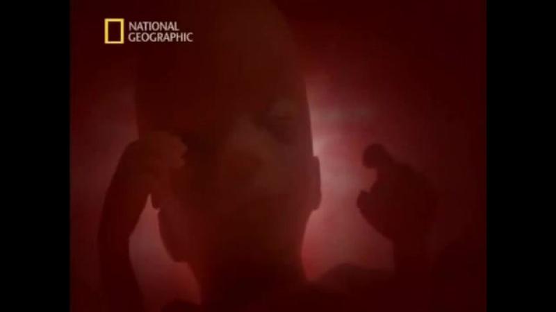 Человек. Жизнь до рождения. Фильм National Geographic.
