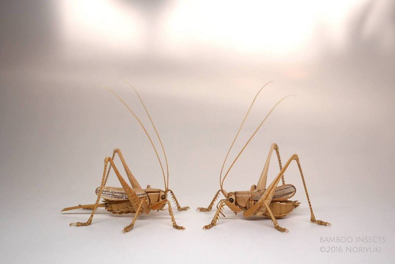 Ну очень жирные насекомые Нориюки Сайтох
