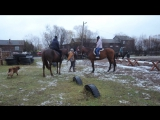 Лошадки 21.10.17