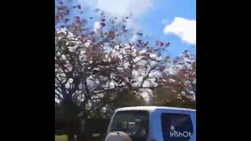 Остров Пасхи Едем через единственный населённый пункт на острове Ханга Роа Hanga Roa в Пуна Пау