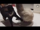 Кот борец.mp4
