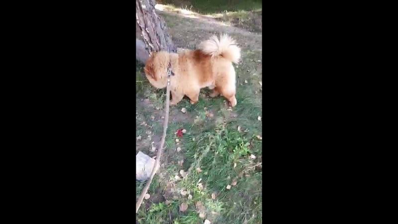 Гуляем с псом 😀