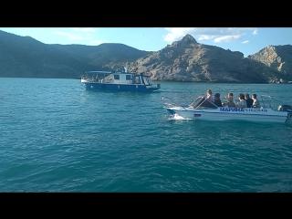 дельфины в Новом Свете