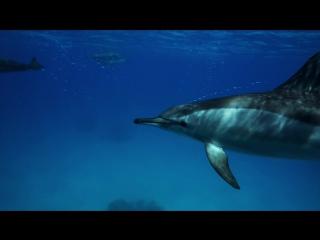 Фридайвинг с Дельфинами