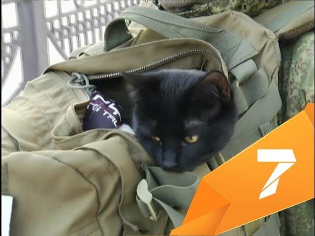 Путешественник идёт с котом на плече из Мурманска до Владивостока: добрался до К...
