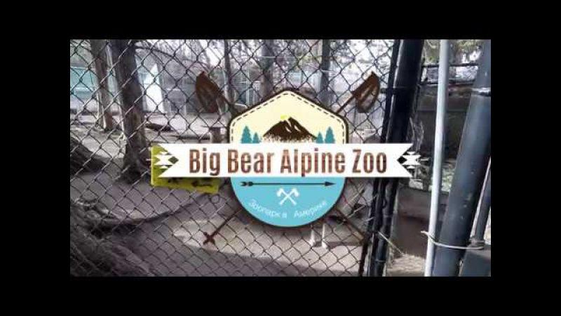 Мишки еноты и барсуки в Зоопарке Америки Big Bear Zoo Racoon, Badger