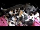 Kittens fighting over mom 7 girls, 1 boy!