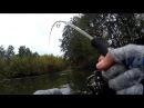 Я таких не ожидал увидеть в маленькой речке Уловистая приманка Рыбалка на спиннинг