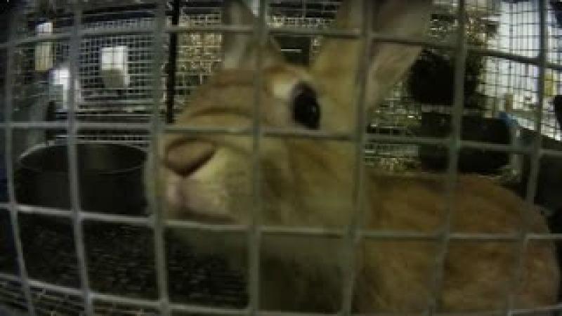Животных, замороженных заживо, грубо газом в Петко, Мельница Поставщиком в petsmart Animals Frozen Alive, Crudely Gassed at Petco, PetSmart Supplier Mill