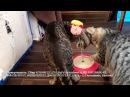 Новая игрушка и конвекторы кошкам в приюте спасибо людям за помощь