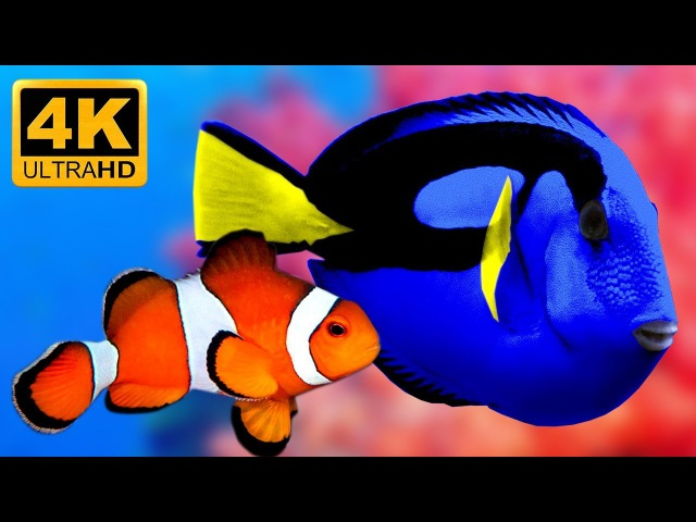 The Best 4K Relaxing Aquarium - Relax Study Chill Sleep 🐟🐠★24/7★ Stunning Coral Life -Video Replay