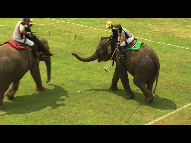 Big competition at Bangkok's elephant polo games