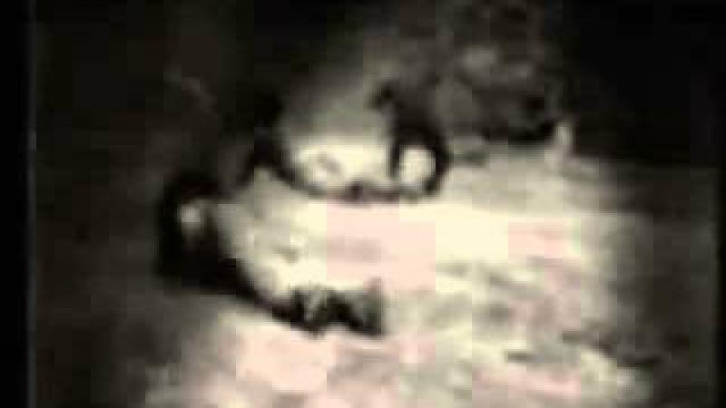 Video maldito de Sadako (The Ring)