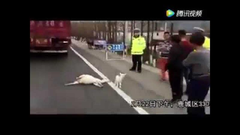 Животноводство убивает сострадание (не спонсируйте деятельность живодеров)