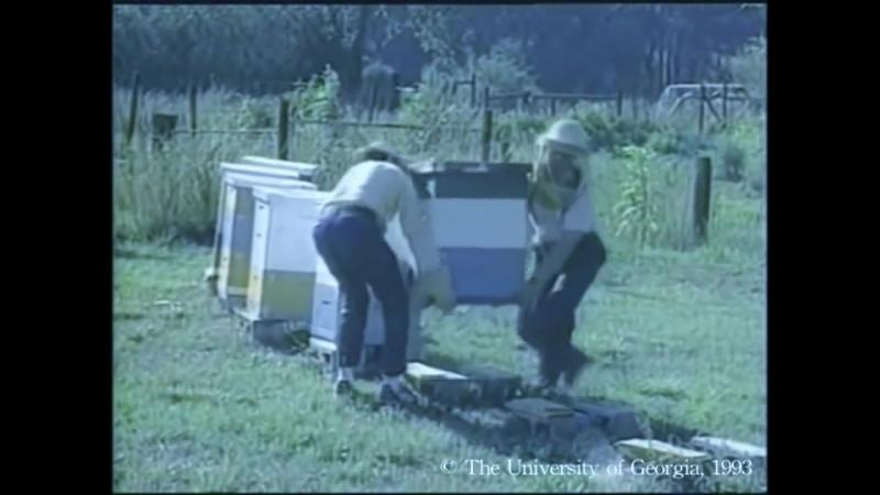 Как организовать кочевку пчел Год из жизни пасеки. Серия 3.4