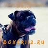 Boxer112. Боксёр в дар