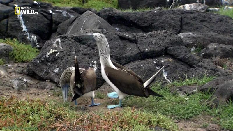 «Дикие животные 24 часа (6). Жизнь на экваторе» (Документальный, природа, 2015)
