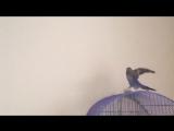 Моя элита попугаи