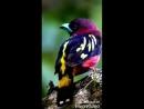 очень красивое видео Птицы