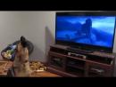 Собака воет вместе с героями мультфильма