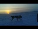 Батухан питомник Тумар вечерняя пробежка