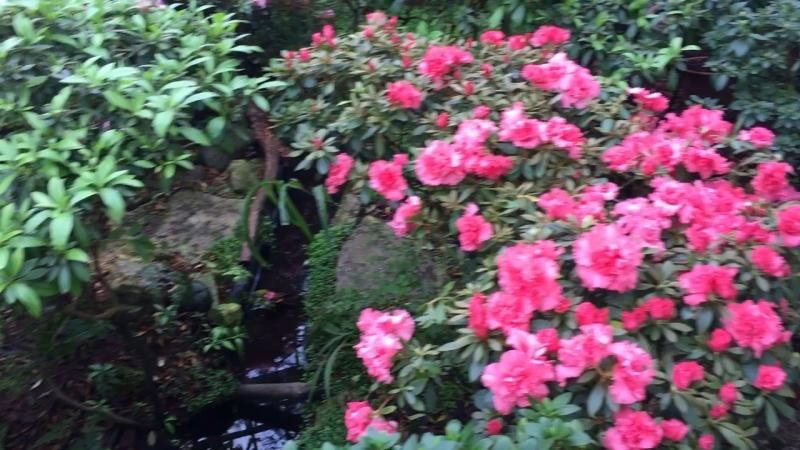 Ботанический сад. Субтропики.