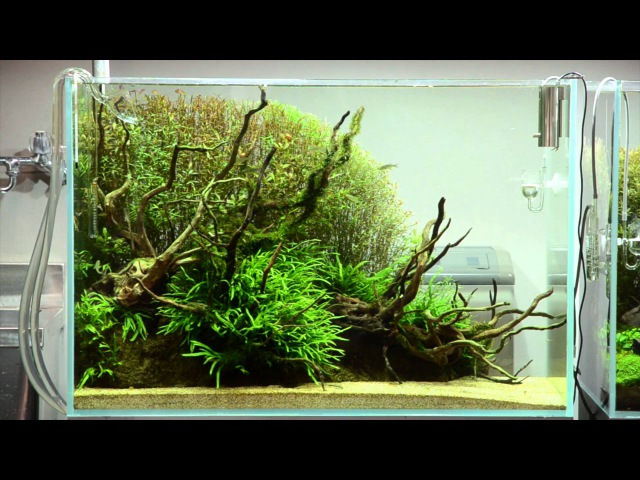 ADA view 327 Follow up video of NA Gallery aquariums 90cm No 1 13