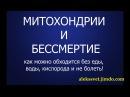 Митохондрии и бессмертие Отключение дыхания