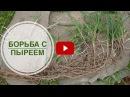 Трава Пырей ➡ Уничтожение сорняков в саду и огороде. Применяем гербициды