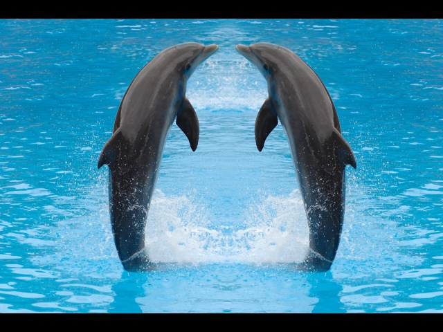 Klaipēdas Delfinārijs / Lithuanian Sea Museum Dolphin Show