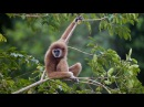 Дикая природа Таиланда. Настоящая дикая природа документальный фильм HD
