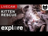 Kitten Rescue Cat Cam powered by EXPLORE.org